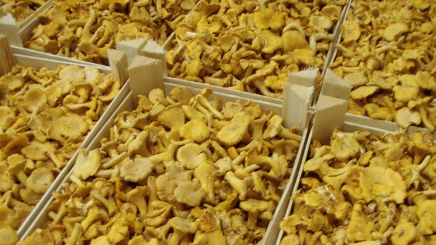 грибы шампиньоны продажа